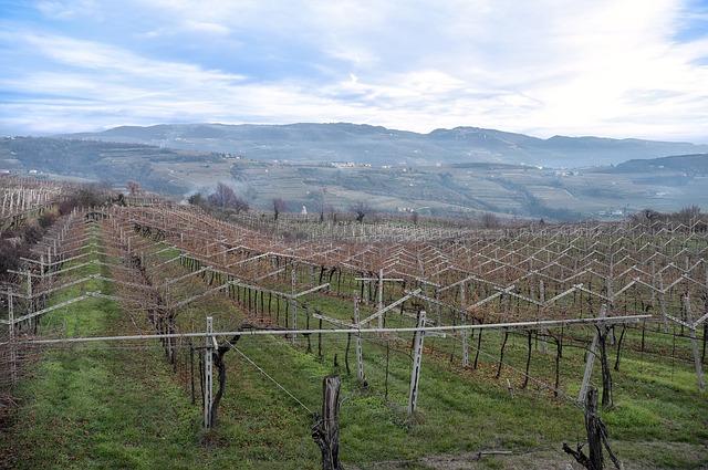 Alla scoperta del vino nel cuore della Valpollicella